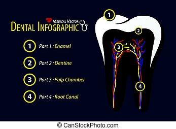平ら, 歯医者の, infographic, デザイン