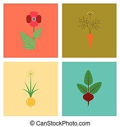 平ら, 花, アセンプリ, allium, daucus carota, イラスト, ベータ, papaver