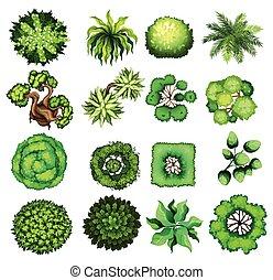 平面図, の, 別, 種類, の, 植物