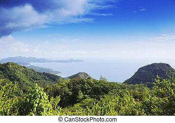 平面図, の, 熱帯 島