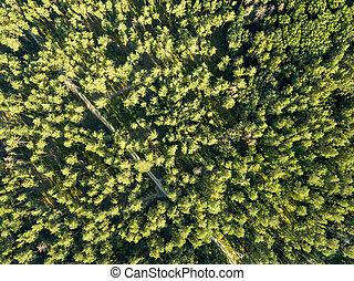 平面図, の, 緑の木, 上に, a, 日当たりが良い, day., 落葉性, 森林, ∥ように∥, a, 背景,...