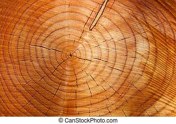 年報, リング, 上に, a, 木の幹