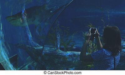 年輕婦女, 在, the, 水族館, 觀看, an, 外來, fish, 拿, 影像, 由于, 移動電話, 在, a, 鯊魚