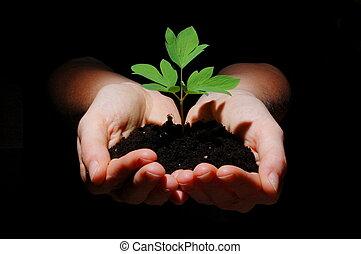 年輕 植物, 由于, 土壤, 在, 手