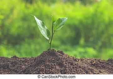 年輕 植物, 由于, 過濾器, 影響, retro, 葡萄酒, 風格