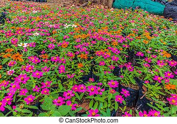 年輕 植物, 花