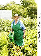 年長の 女性, 水まき, a, 植物