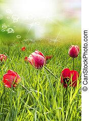 幸せなイースター, tulips., 赤, 庭