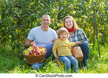 幸せ, ギャザー, 庭, 家族, りんご