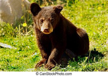 幼獣, 熊