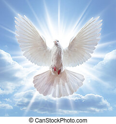 広く, 空気, 開いた, 翼, 鳩