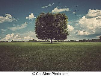 広場, 木