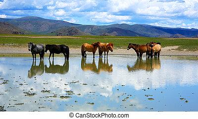 広大, mongolian, mongolia, 牧草地, 馬