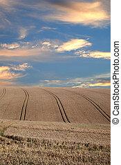 庄稼, 戲劇性的天空, 在下面