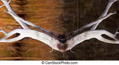 度过, 死, 水, 树木, 反映, 表面, 平静
