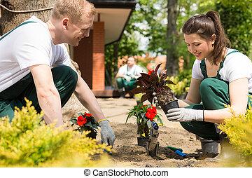 庭師, 植えつけ, 花, 赤