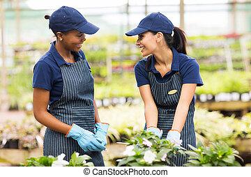 庭師, 話し, 2, 女性, 温室