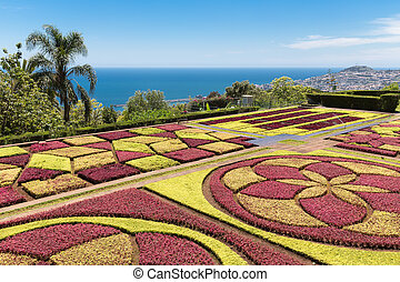 庭, ポルトガル, 島, マデイラ, funchal, 植物