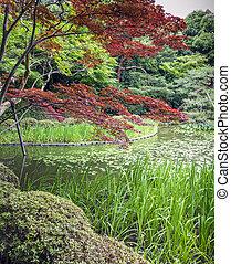 庭, 京都, 赤い緑, 日本