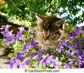 庭, 子ネコ