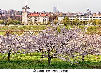 庭, 春, 木, 日本語, sakura, さくらんぼ, 花, 花, ∥あるいは∥