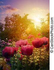 庭, 春, 花, 美しい, 芸術, flowers;, background;