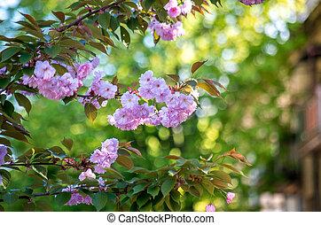庭, 木, sakura, 花, 花