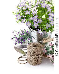 庭, 葉, 装置, 緑, すみれの花