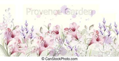庭, watercolor., ラベンダー, 色, ベクトル, pastelate, デリケートである, 花, プロバンス