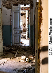 廊下, 保護所, 古い, 年を取った
