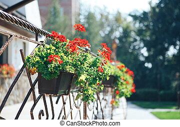 建物, クローズアップ, 花, 金属の鍋, ポット, フェンス, 偽造された, ファサド, 飾られる, 花, outdoors.