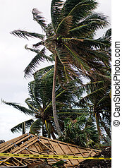 建物, トロピカル, の間, 嵐, 傷つけられる