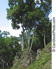 建物, maya, peten, ジャングル, 木, guatemala, 丘, 下に, 小さい, 古い, tikal, 台なし