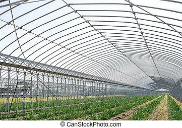 建筑物, 农业, 农场