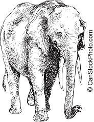 引かれる, 手, 象