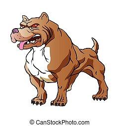 強い, pitbull, bodybuilder.