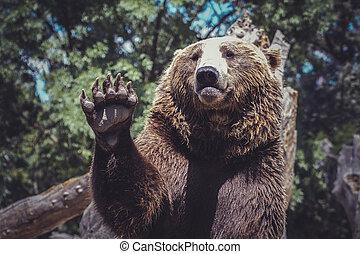 強力, 熊, 振ること, 動物, 威厳がある, かぎつめ