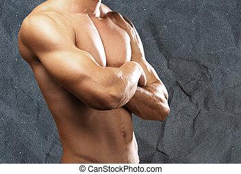 強有力, 軀幹
