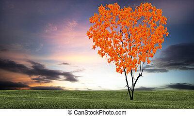形づくられた心, 木, 空, 日没, すてきである