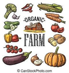 彫版, セット, 有機体である, 農場, 型, 野菜, ベクトル, 黒, lettering.