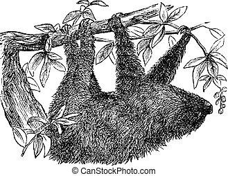 彫版, ナマケモノ, 型, two-toed, didactylus, ∥あるいは∥, choloepus
