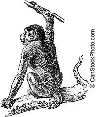 彫版, ニホンザル, 型, sp., サル, ∥あるいは∥