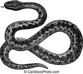 彫版, 型, berus, 毒蛇, vipera, ∥あるいは∥, ヨーロッパ