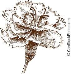 彫版, cornflower, 図画, イラスト