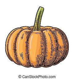 彫版, illustration., 色, 型, pumpkin., ベクトル