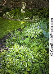 影がある, 庭, 多年生植物