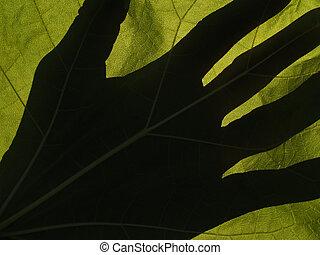 影, バックライトを当てられる, 葉, catalpa, 手