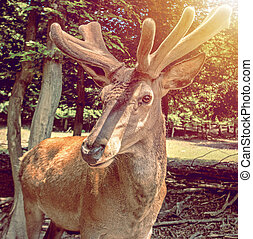 彼の, 顔, 鹿, 質問, fluffy-horned, 肖像画, 表現, 味方