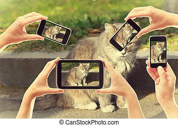 很多, 在中, 人们, 拿, 图画, 在中, a, 猫, 在上, smartphones