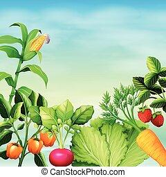 很多, 類型, ......的, 蔬菜